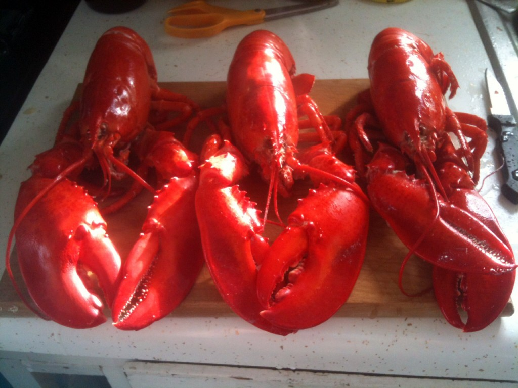 Lobsters for dinner! Wedding reception cooking practice :)