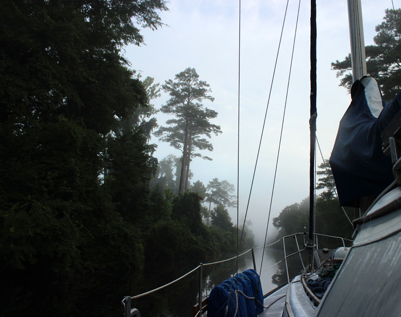 The Great Dismal Swamp - Foggy